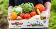 Le lieu de vente va regrouper l'ensemble de la gamme de fruits et légumes Prince de Bretagne typiques des maraîchers du Trégor-Goëlo. Photo : Prince de Bretagne
