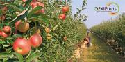 DEXiFruits évalue la durabilité des vergers selon de multiples critères facilement accessibles pour un arboriculteur ou un conseiller.
