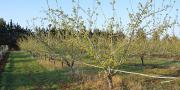 391 exploitations arboricoles étaient certifiées HVE au 1er janvier 2020. Photo : Pixel6TM