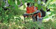 Une étude Axema a évalué la capacité industrielle de la filière des agroéquipements à assurer, en remplacement du glyphosate, notamment en arboriculture. Photo : O.Lévêque/Pixel6TM