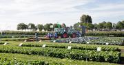 Les dernières innovations variétales en chou, salade, courgette et oignon seront présentées en conditions réelles lors des journées portes ouvertes de Syngenta « Fields of Innovation ». Photo : Syngenta