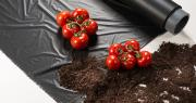 L'utilisation de films de paillage en ecovio® est autorisée pour les cultures biologiques dans de nombreux pays. Photo : BASF