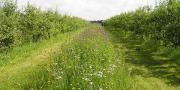 Courant juillet 2015, des enquêtes vont être faites par le Grab et l'Inra auprès des pomiculteurs de la France entière pour étudier les pratiques de biodiversité fonctionnelle.