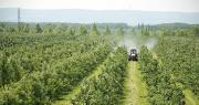Qu'adviendrait-il des exploitations arboricoles et maraîchères si les producteurs venaient à être privés de moyens de protection, se demande le Collectif Sauvons les fruits et légumes de France. Photo : shoot4pleasure10
