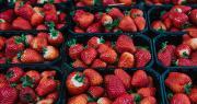 Le prix des fraises a chuté de moitié depuis le début du scandale. Photo : franz12/Fotolia
