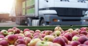La commercialisation de pommes à l'export est rendue difficile en raison d'une précocité de la récolte dans d'autres pays européens comme l'Allemagne, selon le SSP. Photo : littlewolf1989/Fotolia