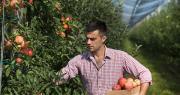 La hausse des charges liée à la suppression du TO-DE pourrait fortement porter préjudice à la filière pomme et poire, selon l'ANPP. Photo : Budimir Jevtic/Fotolia