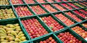 Les stocks de pommes se situent légèrement au-dessous du niveau moyen de la période 2010-2014 (-4%).
