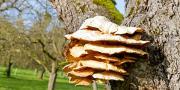 Depuis septembre 2016, Végépolys propose aux producteurs d'identifier les champignons lignivores sur leurs cultures.