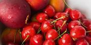 Agreste vient de publier ses estimations de récoltes 2015 en fruits à noyaux: pêches-nectarines, abricots et cerises.