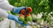 La task force européenne demande que les fruits et légumes soient davantage représentés dans le programme Horizon 2020. Photo : Wayhome Studio