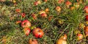 Des initiatives éco-responsables dont certaines offrent une seconde vie aux fruits et légumes.