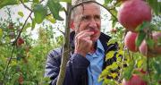 Ingénieur de recherche hors classe au centre Inrae Pays de la Loire, François Laurens a notamment développé la pomme Ariane et la variété Story® Inored, résistante aux souches communes de la tavelure. Photo : DR