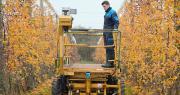 La Morinière teste le guidage optique VizioPilot Line Assist sur sa plateforme de taille. Photo Vantage AM