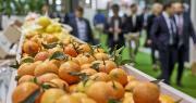Fruit Attraction LIVEConnect a pour ambition de devenir la communauté professionnelle de référence mondiale en matière de réseautage commercial dans le secteur des fruits et légumes. Photo : Fruit Attraction