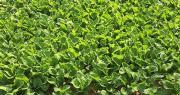 Le Gouvernement a décidé de suspendre par arrêté l'utilisation de produits phytosanitaires à base de métam-sodium pour une durée de 3 mois. Photo : O.Lévêque/Pixel Image
