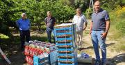 La campagne 2020 de la Cerise des Monts de Venasque a commencé. Photo : DR