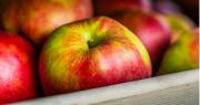 N° 2 français de la filière pommes, Innatis ouvre son capital à Unigrains et réalise de nouvelles opportunités de croissance, dont le rapprochement avec le Domaine des Coteaux. Photo : DR