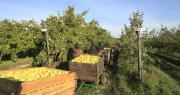 Premier producteur français de fruits en biodynamie, les Côteaux Nantais comptent 96 hectares de vergers certifiés par Ecocert (bio) et Demeter (biodynamie).