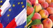 """Lors du dernier conseil spécialisé """"fruits et légumes"""", FranceAgriMer a fait un point sur les trois dispositifs de mesures exceptionnelles mises en œuvre, depuis le mois d'août, par la Commission européenne suite à l'embargo russe."""