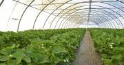 Les producteurs de fruits et légumes en abri froid sont invités à répondre à l'enquête CTIFL Abri'Nov. Photo : C.Even/ Pixel6TM