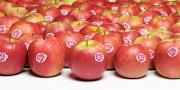 Les pommes en démarche club comme Pink Lady semblent redynamiser le marché.