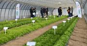 Les participants ont découvert en avant-première près de 60 nouvelles variétés de salades proposées par Vilmorin-Mikado pour la campagne 2019-2020. CP : Vilmorin SA