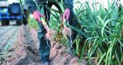 Avec Agrilogique, la branche légumes et fruits frais d'Agrial entend « tendre vers l'exemplarité à toutes les étapes de la chaîne de valeur pour préserver l'environnement. » Photo : Agrial