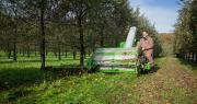 Les épisodes chauds et secs observés durant l'été ont permis de débuter la récolte de pommes à cidre avec une avance de deux semaines. Photo : Unicid - Cidres de France.