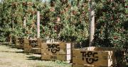 Poppi™ sera l'une des premières pommes néo-zélandaises de la saison 2021 à arriver sur les principaux marchés asiatiques. Photo DR