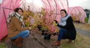 Séverine Lemarié, ingénieur R&D et agronome (à gauche), et Anaïs Jouault, ingénieure d'étude à l'IRHS, travaillent sur le projet Cascade. Photo : O.Lévêque/Pixel6TM