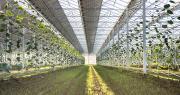 La première année d'exploitation des serres photovoltaïques, où sont produits des kiwis jaunes et rouges, est un succès pour Reden Solar et Jean-Michel Aurières, producteur dans le Lot-et-Garonne. Photo : DR