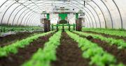 Le robot Dino de Naïo Technologies est spécialisé dans le désherbage des légumes en planches. Photo : Tien Tran