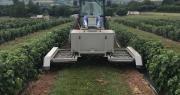 Un prototype de l'entreprise RootWave de désherbage électrique est testé sur les cultures de petits fruits rouges en Angleterre. Photo : Rootwave