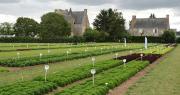 Le 5 septembre dernier, Vilmorin-Mikado et Enza Zaden organisaient leurs plateformes variétales salades en Anjou. Photo : O.Lévêque/Pixel6TM