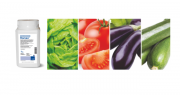 Romeo® est homologué sur salades, tomate, aubergine, courgette, concombre, cornichon, melon, potiron, pastèque et fraisier. Photo BASF