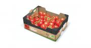 Solarenn commercialise, dès cette année, une gamme de tomates bio, en grappe et côtelées Noires cultivées sous abri froid, en pleine terre, de juin à octobre. Photo Solarenn