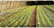 Certains intrants autorisés en agriculture biologique par la réglementation européenne sont cependant controversés, comme le plastique de paillage. Photo : O.Lévêque/Pixel6TM