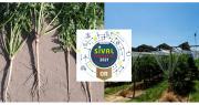 Jeudi dernier, le jury final du Concours Sival Innovation a délibéré et sélectionné 16 innovations lauréates et 12 nominées. Photos Sival
