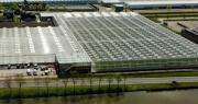 Le nouveau centre Tomato Vision comprend 14 000 m2 de serre de haute technologie où 800 nouveaux hybrides uniques sont testés et sélectionnés pour les besoins spécifiques du marché. CP :  Syngenta