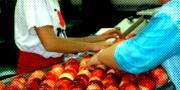 La récolte française 2012 de pêches et de nectarines devrait se situer sous la  barre des 300 000 t.
