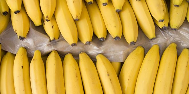 La concurrence des pays tiers qui produisent des bananes à bas coût a fait chuter le cours des bananes en-deçà du coût de production des producteurs européens. Photo : romvo/Adobe Stock
