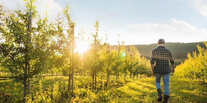 Les agriculteurs installés depuis moins de cinq ans peuvent bénéficier du dispositif « Bon diagnostic carbone ». Photo Halfpoint/Adobe stock