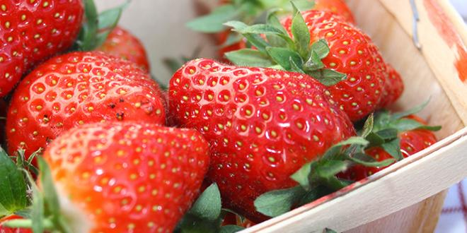La récolte de fraises de la campagne 2019 serait de 59 400 tonnes. Photo : Juliemrvl/Adobe Stock