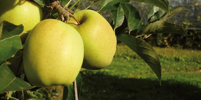 Lundi 20 mars 2017, les pomiculteurs de la zone de l'AOP Pommes du Limousin ont signé une charte des bonnes pratiques sur l'usage des pesticides.