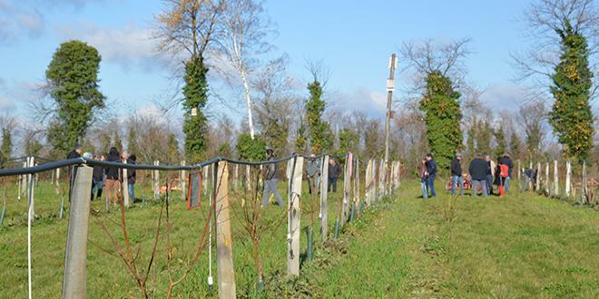 Visite de la parcelle expérimentale du domaine de Gotheron où ont été semés des engrais verts dès la plantation de pêchers. Photo : C.Even/Pixel Image