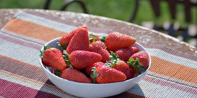 La Mariguette est la nouvelle variété de fraise estampillée label Rouge, une première depuis dix ans. Photo Rougeline