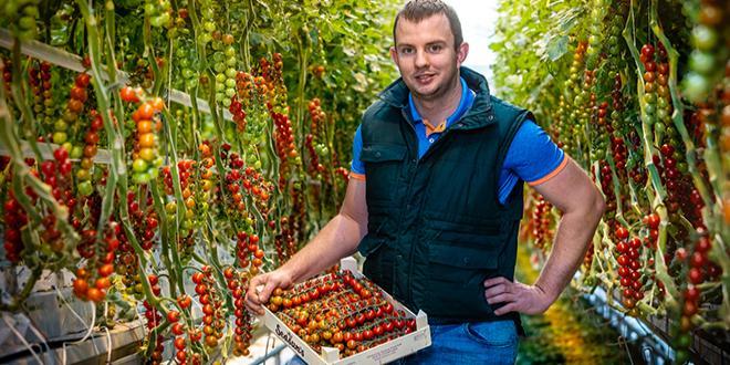Le nouvel insecticide de BASF sera homologué, dans un premier temps, pour une utilisation sur une large gamme de fruits et légumes, en vigne et en pommes de terre. Photo BASF