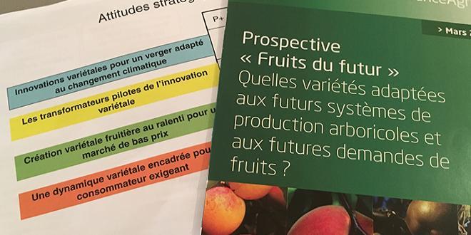 Quatre scénarios possibles pour l'avenir de la filière arboricole ont été imaginés. Photo : B.Bosi/Pixel Image